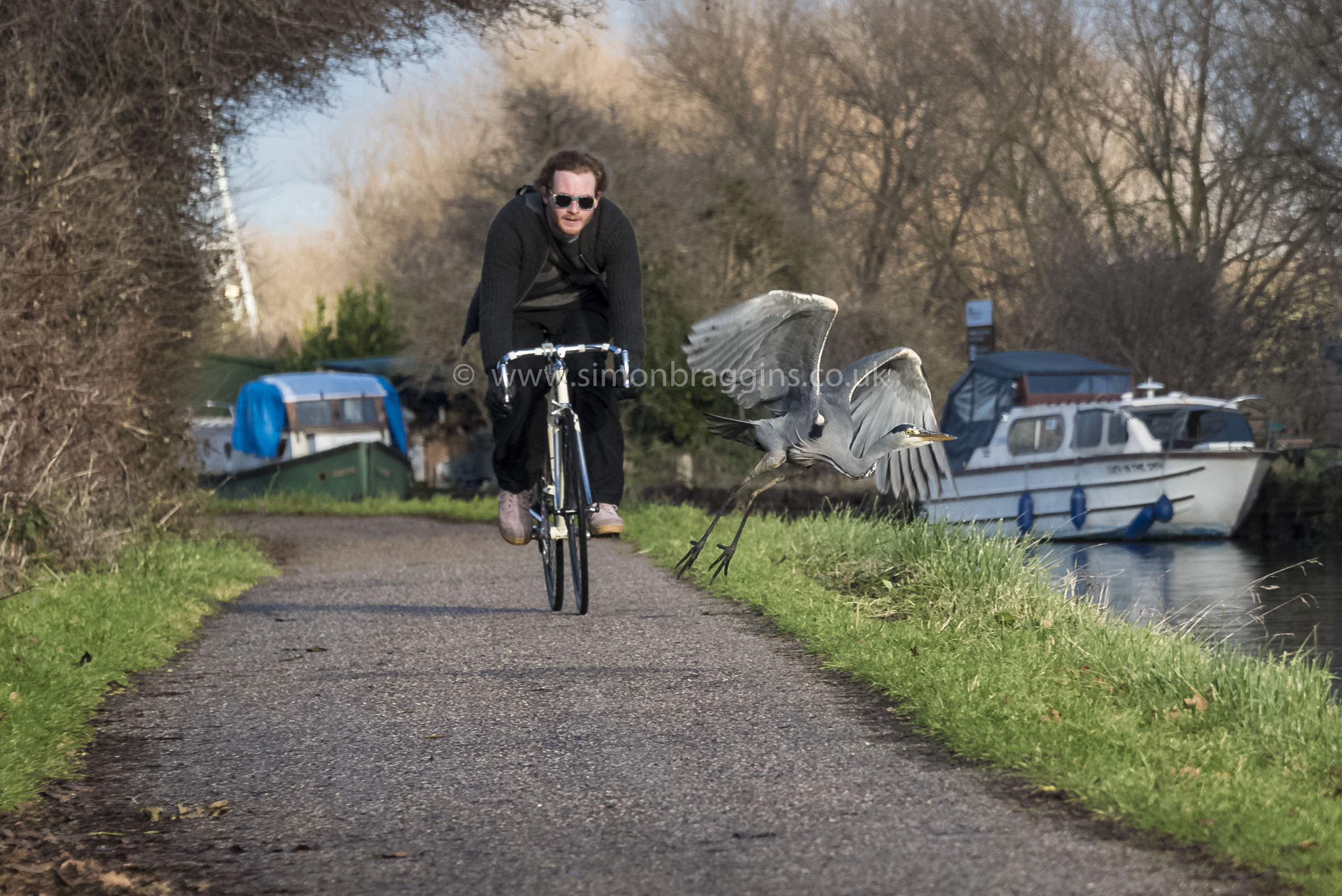 Outta the way: A heron takes no chances with a fast cyclist, Tottenham Hale, December 2017