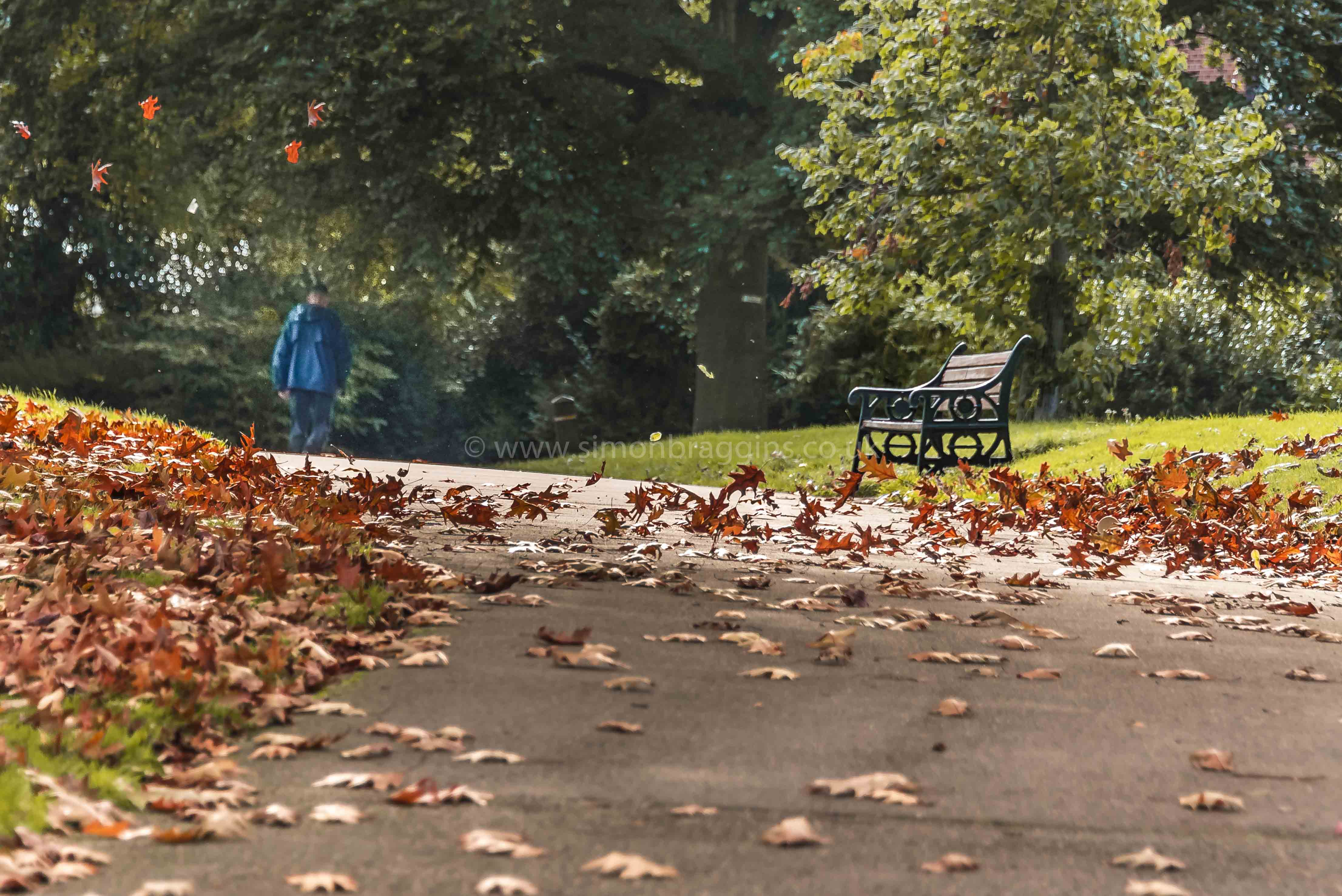 Autumn Gust: A gust of wind blows up leaves - Springfield Park, October 2017